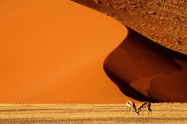 Namib wonderland wallpaper