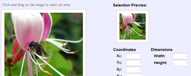 ImgAreaSelect1 26 jQuery Zoom Plugins & Tutorials   jQuery Zoom