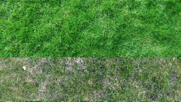 9-Grass-Texture-Pack