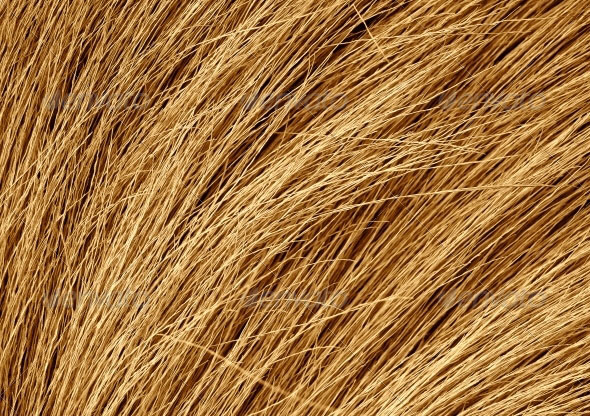 Grunge-texture-of-the-dry-grass
